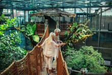 Välkommen till nya Regnskogen