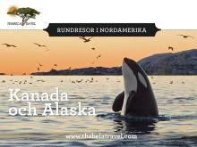 Följ med Thabela Travel på kryssning till Kanada och Alaska