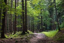Stort investeringsbehov i Rumäniens välskötta skogar