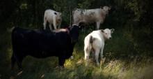Almedalen 4/7: Djurskydd vs miljöskydd – går det att kombinera ett starkt miljöarbete med god djurvälfärd?
