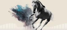 Idag släpps biljetterna till Gothenburg Horse Show