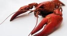 Årets tullkvot på frysta skaldjur tog slut rekordsnabbt!