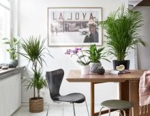 Kauniita ja hyväksi sinulle – Plantagen listaa parhaiten ilmaa puhdistavat kasvinsa