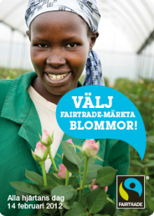 Schyssta rosor i Eskilstuna inför alla hjärtans dag