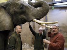 Besök av elefantexpert i Borås Djurpark