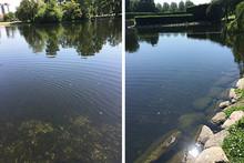Pressvisning: Ultraljud renar dammar