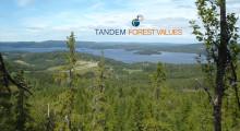 72 ansökningar till Tandem Forest Values – Sveriges gåva vid Finlands 100-årsjubileum