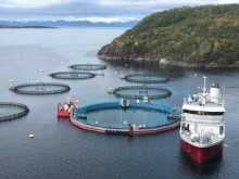 Production start at Cermaq's new closed containment system in Horsvågen