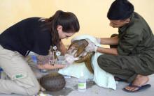 Statement zur Aufnahme der Traditionellen Chinesischen Medizin in globales WHO-Kompendium