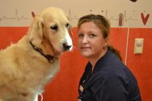 Hälsinge Smådjursklinik i Hudiksvall, Söderhamn och Ljusdal är finalist i Årets Djurklinik 2017