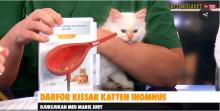 Urinproblem - Katt
