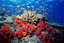 WWF: Hälften av havens fiskar och ryggradsdjur har försvunnit