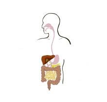 Svensk vårdpersonal tror på probiotikas hälsoeffekter - ProViva är produkten flest rekommenderar sina patienter