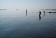 Ny webbsida gör livet enklare för fritidsfiskare