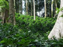 Rainforest Alliance nominerad för bästa Twitter