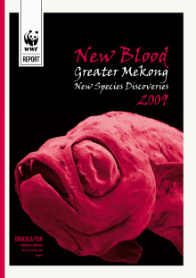 New Blood Greater Mekong New Species Discoveries 2009