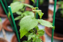 35 miljoner kronor till tvärvetenskaplig forskning om växters stressrespons