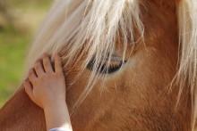 Över 3000 barn gör höstlovet till ett Hästlov