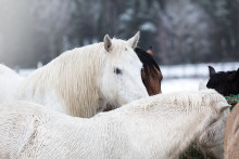 Råd om ditt djur går igenom isen - Att tänka på om olyckan är framme