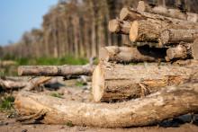 Danske virksomheder importerer ulovligt teaktræ fra Myanmar