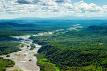 Skove: En verden af mangfoldighed, som vi må kæmpe for