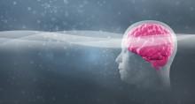 Neuromarketing II: Softdrinks und Autos im Gehirn-Scanner