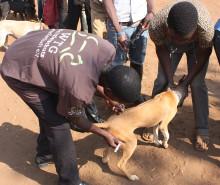 Pressemitteilung | Kampf gegen Tollwut: Impfung von Streunerhunden das Mittel der Wahl  (Welt-Tollwut-Tag am 28. September)
