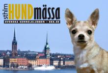 Stockholm Hundmässa 2012