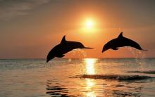 Företagskultur är inte bara doftljus och delfinljud