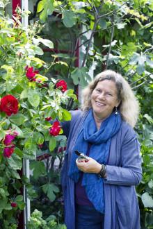 Vinn tid i trädgården med höstplantering