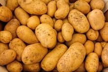 Historiskt låg skörd av matpotatis