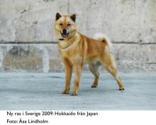 Nakna kineser är trendiga - dvärghundar fortsatt populära
