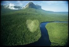 100 miljoner träd!  Yves Rochers nya mål för en grönare värld