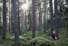"""Ulf Troeng vann första pris i PEFC:s fototävling med bilden """"Blåbärsskogen"""""""