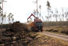 Lönsamt att krossa stubbar i skogen