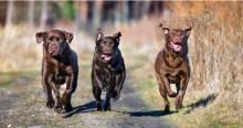 Eläinlääkäri: Huomioi nämä 5 asiaa punkkilääkkeen valinnassa