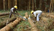 Seminar: Forest Certification in Africa 29 Jan – register today!
