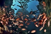 L'île Maurice présente au salon  de la plongée du 12 au 15 janvier 2018