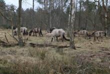 Køb af dansk skovcertifikat – hvad går dine penge til?