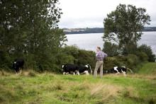 Analyse: Danskerne vil have lokalproduceret mælk