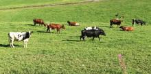 Øker forsikringsutbetaling til hardt rammede bønder