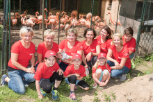 Santander unterstützt Umbau der Flamingo-Lagune im Tierpark Cottbus