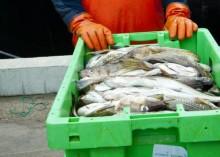 EU-möte om fiskekvoter för Västerhavet