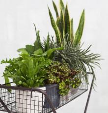Krukväxter som luftrenare
