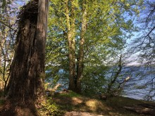 "Motorsavsmassakre i nationalpark ""Kongernes Nordsjælland"""