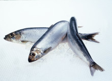 Norwegian pelagic exports reduced in October