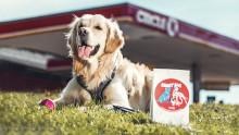 Circle K – nu även hundarnas bästa vän