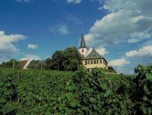 Vin och motion på Rheingau-Riesling-vägen