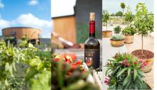 Sommaraktiviteter på vineriet - Nordic Sea Winery - på Österlen