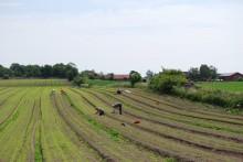 Tusen nya jobb inom KRAV-certifierat lantbruk